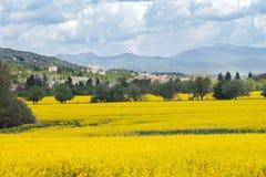Rapeseed field in Slovak Republic stock photo