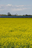 Rapeseed field. With solar pannel farmland bologna Stock Images