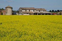 Rapeseed field. With solar pannel farmland bologna Stock Photo