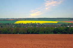 Rapeseed field at spring Royalty Free Stock Images