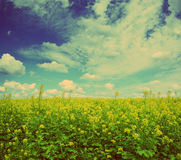 Rapeseed field - vintage retro style Stock Photos