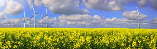 Rapeseed Field With Wind farm - Renewable Energy Panorama.  stock photography