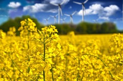 Rapeseed field and wind power plants on a sunny day. Ecology & n Royalty Free Stock Images