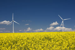Rapeseed field and wind turbines Royalty Free Stock Images