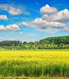 Rapeseed field withcloudy blue sky. Spring landscape Stock Photos