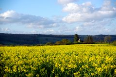 Rapeseed Field & Wotton Church Stock Images