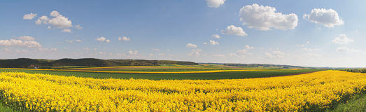 Rapeseed fields Royalty Free Stock Image