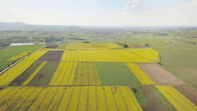 Rapeseed fields from the height of bird flight. Shooting from the drone or aircraft. Agricultural business. Growing oil plants for. Alternative ecological fuels stock photos