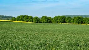 Rape fields hidden in the landscape. Rapeseed fields hidden in the landscape - search image Stock Image