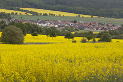 Rapeseed Fields and Houses Royalty Free Stock Images