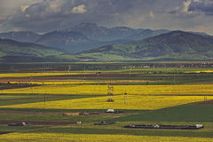 Rapeseed fields mountain landscape Stock Photography