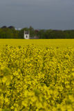 Rapeseed fields in Southern Sweden. Rapeseed fields outside Lund, Sweden. Spring Stock Image