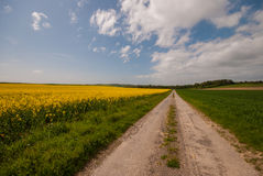Rapeseed Fields. The typical rapeseed fields in France during springtime Royalty Free Stock Images