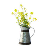 Rapeseed flower in a pitcher Stock Photography