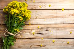 Rapeseed flower on wooden table stock photo