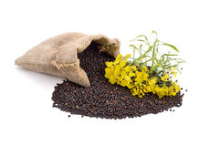Rapeseed with flowers  isolated on white background. Stock Images