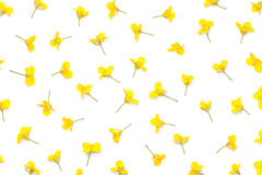 Rapeseed Flowers Isolated on White Background Stock Photo