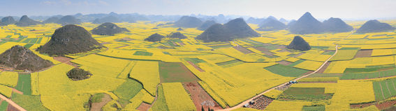 Rapeseed flowers of Luoping in Yunnan China Stock Photography