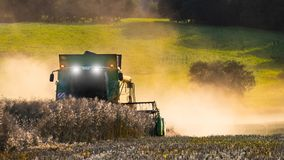 Rapeseed harvesting by combine on summer field. Brassica napus stock photo