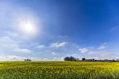 Rapeseed hill Royalty Free Stock Photography