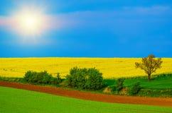 Rapeseed koloru żółtego pola w wiośnie Obraz Royalty Free