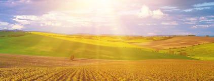 Rapeseed koloru żółtego pola w wiośnie Zdjęcie Stock