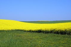 Rapeseed and meadow Royalty Free Stock Photos