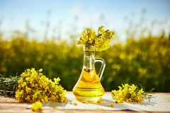 Free Rapeseed Oil Bottles Canola On Background Rape Field Stock Photography - 149871032