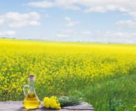 Rapeseed oil canola on background field and sky Royalty Free Stock Images