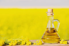 Rapeseed oil canola on background field and sky Royalty Free Stock Photos