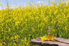 Rapeseed oil canola on background field and sky Stock Images