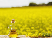 Rapeseed oil canola on background field and sky Royalty Free Stock Photo