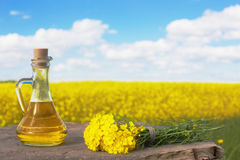 Rapeseed oil canola on background field and sky. The rapeseed oil canola on background field and sky Royalty Free Stock Photos