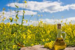 Free Rapeseed Oil Canola On Background Field And Sky Stock Images - 96180984