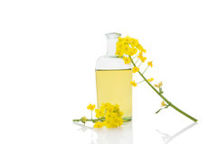 Rapeseed oil and flower. Rapeseed oil in glass bottle and flower on white background Royalty Free Stock Photo