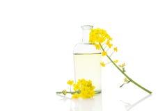 Rapeseed oil and flower. Rapeseed oil and flower on white background Stock Image