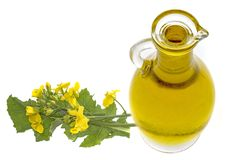 Rapeseed oil in a glass bottle Royalty Free Stock Photos