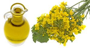 Rapeseed oil in a glass bottle Royalty Free Stock Image