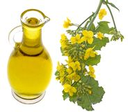 Rapeseed oil in a glass bottle Stock Image