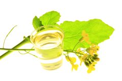 Free Rapeseed Plant And Oil Royalty Free Stock Photos - 24892518