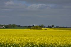 Rapeseed pola w Południowym Szwecja Obrazy Royalty Free