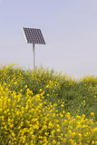Rapeseed and solar panel Stock Image