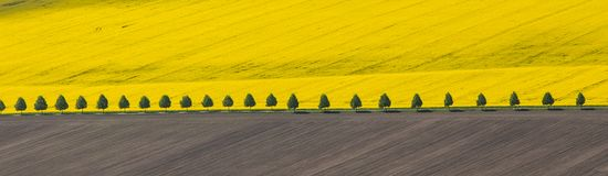Wild flowering of rapeseed on a farm field in Poland stock images