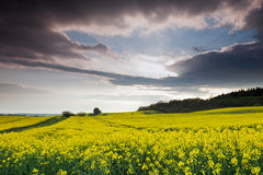 Rapeseed Under Clouds Stock Photography