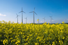 Rapeseed with wind engines Stock Image