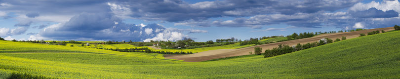Rapeseed yellow fields in spring Stock Photography
