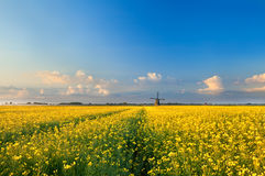 Rapeseend flower field and windmill Stock Photo