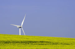Rapessed and wind turbine Royalty Free Stock Photography