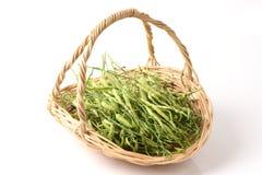 Raphanus sativus Linn. Var. Caudatus Alef. Vegetables. Royalty Free Stock Images
