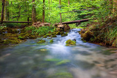 Rapid creek flowing through forest. Rapid creek flowing through green lush forestforest Royalty Free Stock Photo